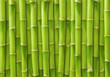 canvas print picture - green bamboo background