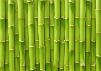 Panel Szklany Bambus green bamboo background