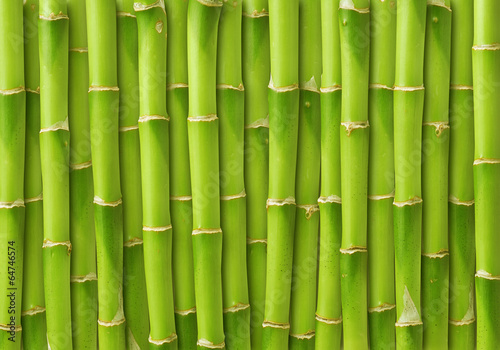 Foto op Canvas Bamboo green bamboo background