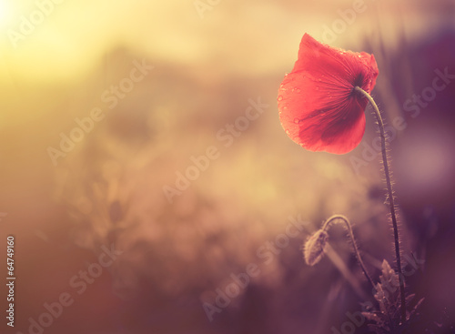Foto op Canvas Klaprozen wild poppy flower