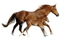 Foal And Mare In Perfect Simul...
