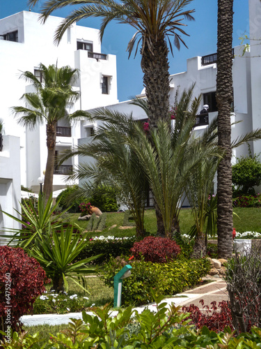 Poster de jardin Europe Méditérranéenne plante fleur maroc