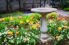 Old Bird Bath In The Park