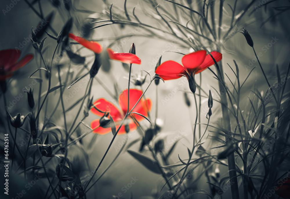 Fototapety, obrazy: red flowers
