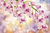 Kwiaty orchidei