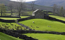Old Barn And Dry Stone Walls Of A Hill Farm In North Yorkshire -