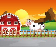 A Cow Beside The Wooden Barnho...