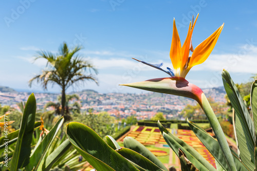 Fotografie, Obraz  Strelitzia in Botanical garden of Funchal at Madeira Island