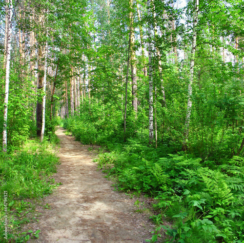 Photo sur Toile Vert Path in a mixed forest. Summer landscape