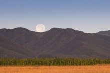 Corn Field With Full Moon Over Mountains In Background