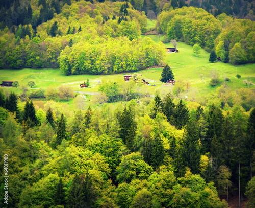 Papiers peints Vert chaux alpes...grisons en mai