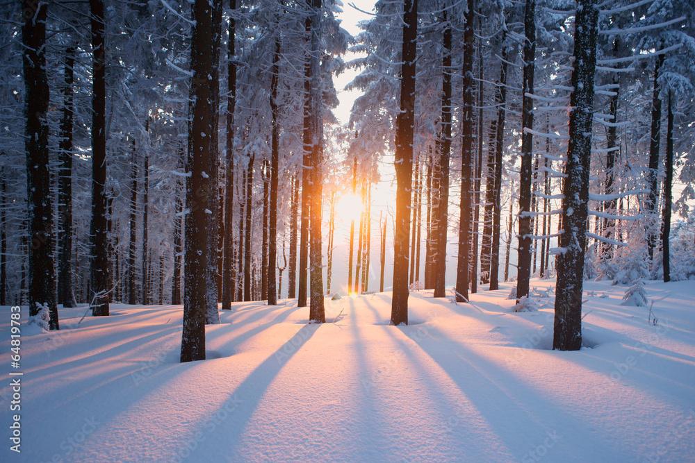 Fototapeta Sunset in the wood in winter period
