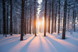 canvas print picture - Sunset in the wood in winter period