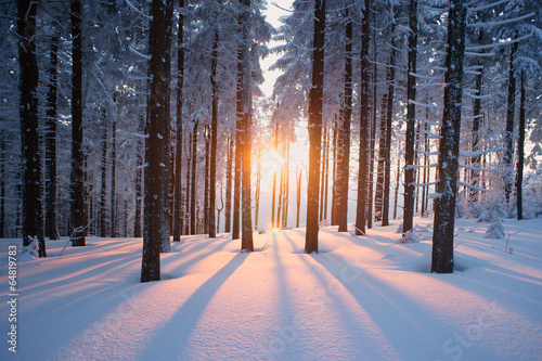 Poster Bomen Sunset in the wood in winter period