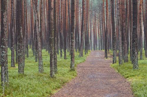 Türaufkleber Straße im Wald las Susiec