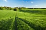 Fototapeta Krajobraz - Pole zboża