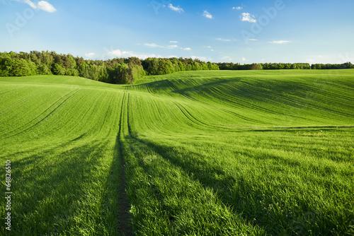 Spoed Foto op Canvas Platteland Pole zboża