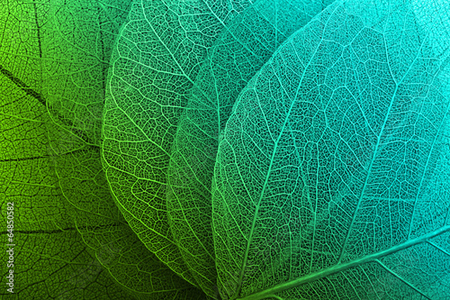 Autocollant pour porte Macro photographie Macro leaves background