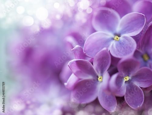 Fotobehang Lilac Lilac bokeh