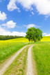 canvas print picture - Wanderweg in die Natur