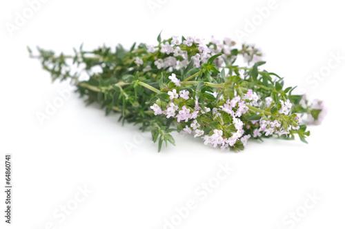 thym en fleurs