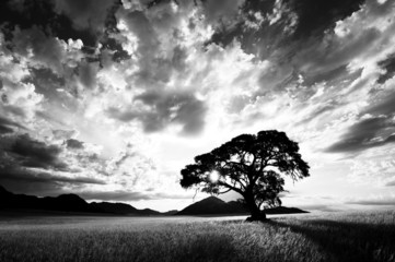 Obraz na Szkle Czarno-Biały Baum