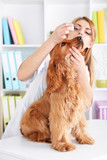 Beautiful young female veterinarian with dog in clinic