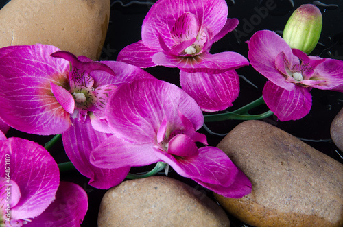 Pebbles and purple flowers