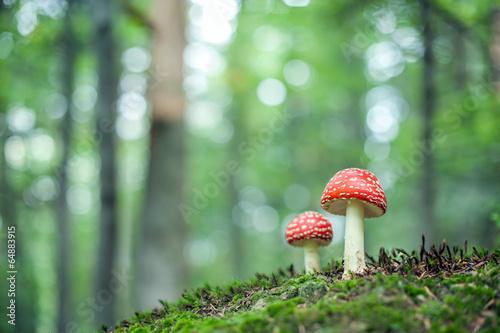 Canvas Print mushroom