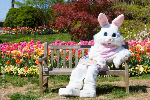 Easter bunny on bench and tulips Fototapeta