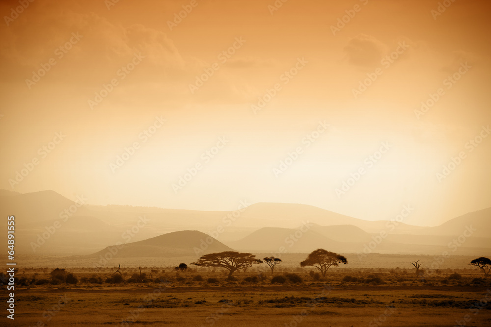 Fototapety, obrazy: african savannah at sunrise