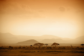 Fototapeta african savannah at sunrise
