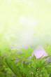 Hintergrund frühlingshaft mit Ahornblättern