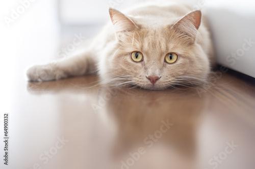 Fotografia Bored cat