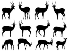 Set Vector Silhouettes Of Ante...