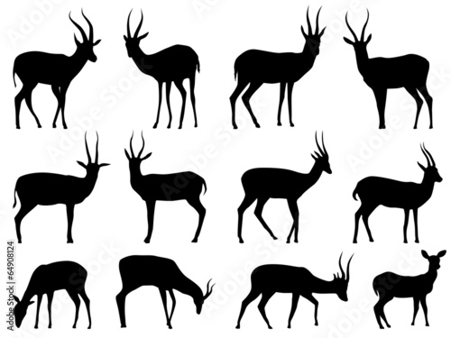 Set vector silhouettes of antelopes. Canvas Print
