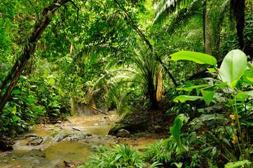 Fototapeta Darien jungle