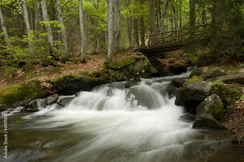 Aluminium Prints Forest river Mountian River