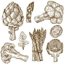 Engraving Illustration Of Green Vegetables
