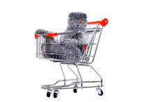 Cat Lying In A  Shopping Trolley On White Background