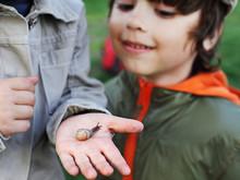 Children Learn Snail, Focus On Snail