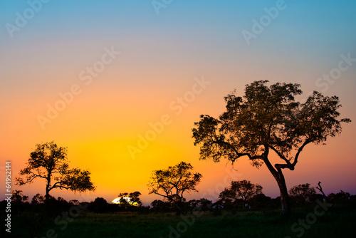 Photo sur Aluminium Afrique du Sud Sunset in Kruger park, South Africa