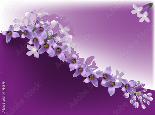 Obraz na plátně lilac flower curl illustration