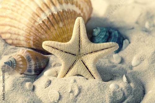 muszle-i-rozgwiazdy-na-piasku