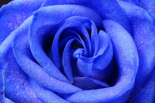 szczegoly-niebieski-kwiat-rozy