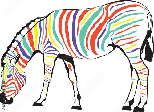 Fototapeta Zebra kolorowa obraz