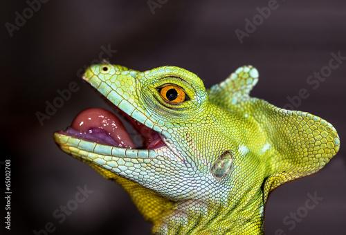 Head chameleon selective focus on eye