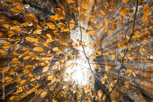 autumn leaves and sun rays