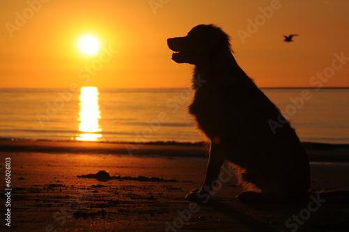 Door stickers Dog Hond zit op het strand bij zonsondergang
