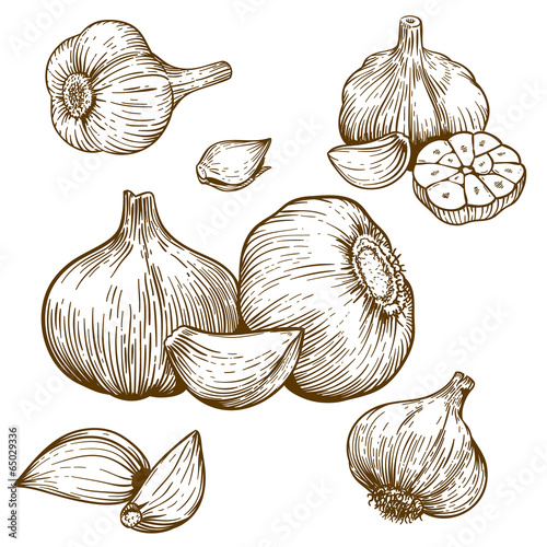 Fotografía  engraving illustration of garlic